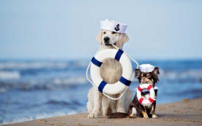 Viaggiare con animali in Grecia: Informazioni utili