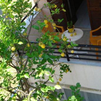 Afrodite appartamenti Cefalonia